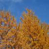 Jesen je lepa