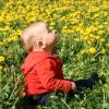 Regratovi cvetoči travniki
