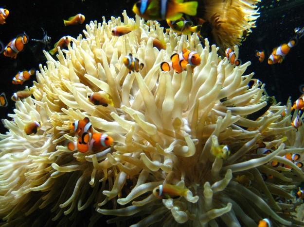 Nemo-ti v oceanografskemu muzeju v Monaku