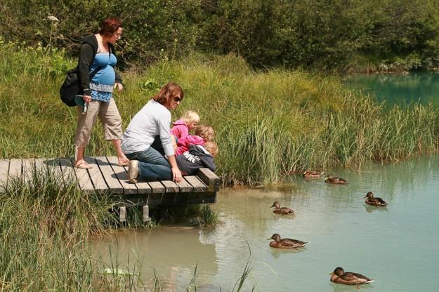 Zelenci - izvir Save Dolinke